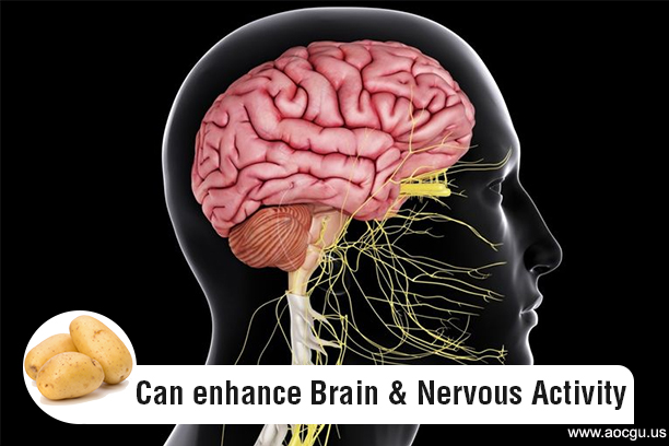 potato enhance Brain & Nervous Activity