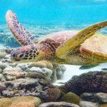 world turtle day-1