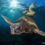 world turtle day-3
